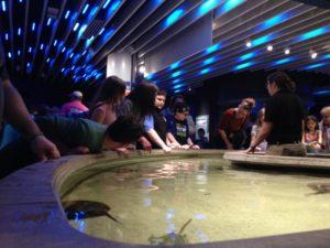 Family Fun at the Aquarium
